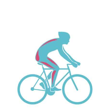 Мышцы, задействованные при велотренировке