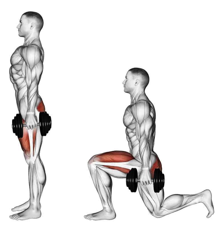 Мышцы, работающие при выполнении выпадов