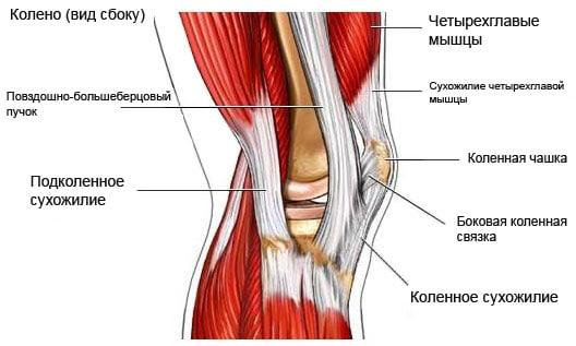 Схема колена в разрезе